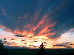 BWmontanaSunset.jpg clouds sunrise sunset dawn dusk trees forest woods woodlands Landscapes - Rural