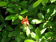MALblueRidge.jpg Flora - Flower Blossoms green leaves leafs photography