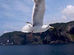 TMabashiri.jpg Fauna birds avian animals photography