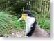 SMDplover.jpg Fauna birds avian animals photography yellow feathers closeup close up macro zoom